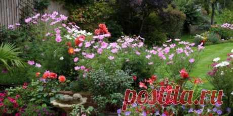 5 цветов-однолетников с фото, которые можно сеять под зиму
