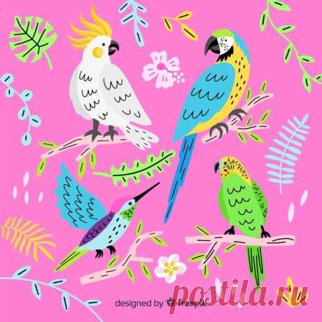 Descarga gratis Set de pájaro exótico dibujado Descubre miles de vectores gratis y libres de derechos en Freepik