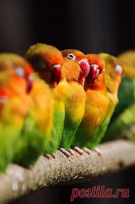 попугайчики!
