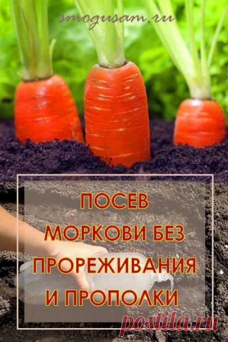 Урожайная морковь хитрым способом без прореживания