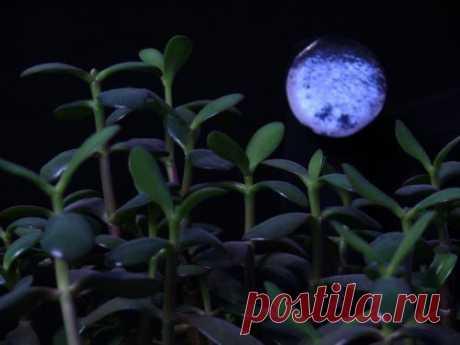 Лунный календарь комнатных растений на 2017 год