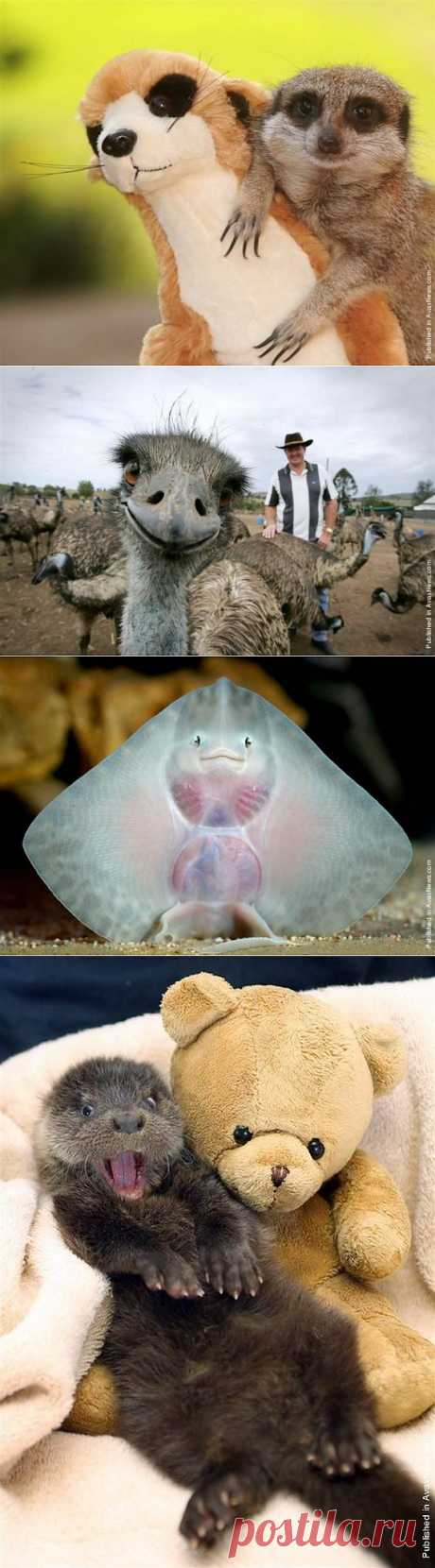 Веселые животные