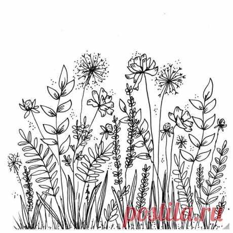 Создание ботанических чертежей и рисунков для меня … — Главная
