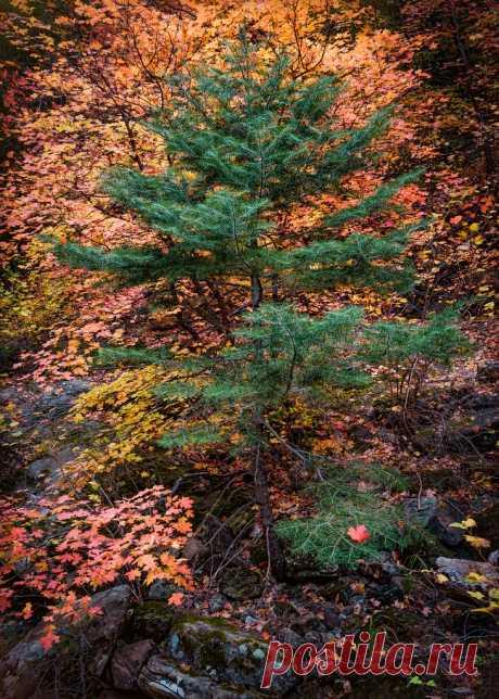 Sedona-5411-Edit Forest fall colors in Sedona
