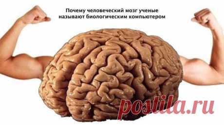 В копилку Разума:  *** Человеческий мозг обладает большими возможностями, чем мы думаем. Его можно тренировать и заставлять работать иначе. А это, в свою очередь, определяет то, какой будет наша жизнь.   1.Мозг не видит разницы между реальностью и воображением.  Мозг реагирует в равной степени на все, о чем вы думаете. В этом смысле для него нет разницы между объективной реальностью и вашими фантазиями. По этой причине возможен так называемый эффект плацебо.  Если мозг счи...