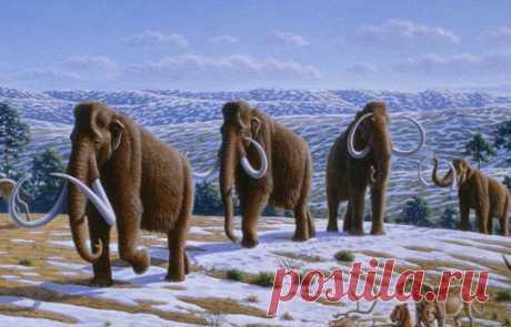 Все ли мамонты вымерли?