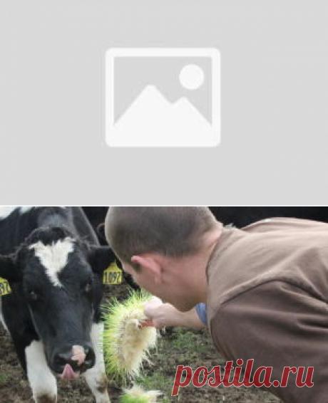 Использование селена в рационах лошадей - БиоКорова