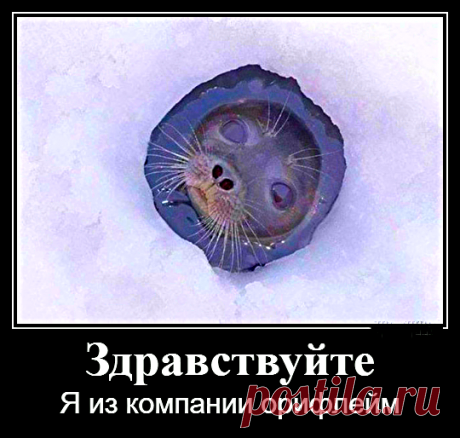 Юмор от Михалыча