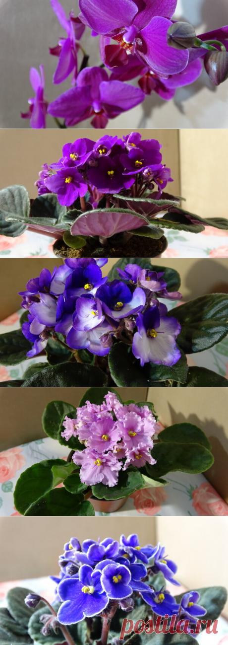 Попала на цветочную распродажу и купила много очаровательных фиалок и красавицу-орхидею | alla-Fi и Fiалки Комнатные цветы | Яндекс Дзен С Вами alla-Fi и в этой статье я расскажу вам о том, как попала на цветочную распродажу и накупила много-много красивых фиалок и одну красавицу орхидею (фаленопсис) #цветы #фиалки #комнатныецветы #комнатныерастения #растения #цветоводство