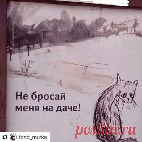 #Repost @fond_murka (@get_repost) ・・・ Прогремели все посты о мольбе не бросать животных на дачах... Но как в подкрепление и завершение данной темы,ведь вроде как дачный сезон официально окончен, хочу обратиться ко всем, кто бросил там своих животных - ПОЖАЛУЙСТА ВЕРНИТЕСЬ И ЗАБЕРИТЕ ТЕХ,КОГО ОСТАВИЛИ ТАМ!!!У вас еще есть шанс очистить свою совесть, ведь ПОКА они еще живы, ПОКА не все разъехались и есть возможность хоть как то добыть пищу, ПОКА не наступили сильные холода...ПОТОМ для них не насту