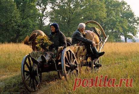 Совет от деда - как выбирать жену)   Деревня Утешково. Однажды мужики спросили деда, скажи вот ты с женой живешь полста лет и не ругаетесь (в деревне все про всех знают). Как это?- Вы знаете, что молодые вечерами ходят на посиделки, а …