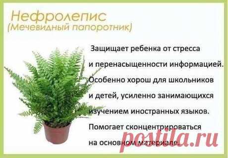 Цветы для детскoй