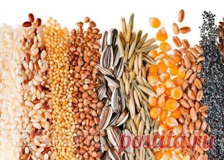 Los plazos del almacenaje y la germinación de las semillas hortalizas (la tabla). Los artículos de la compañía «ZELENY el Internet SV_T- la tienda para el granjero, el horticultor, el horticultor»