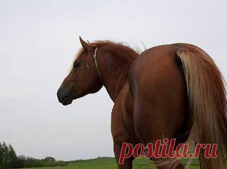 Лошади - все о лошадях - Продажа лошадей