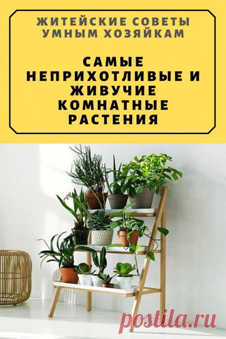 Самые неприхотливые и живучие комнатные растения | Житейские Советы