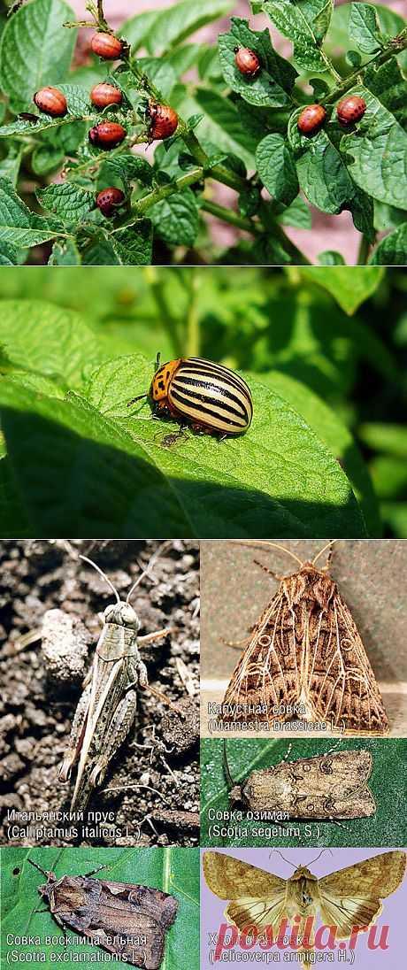 Экологически безопасные средства против огородных вредителей