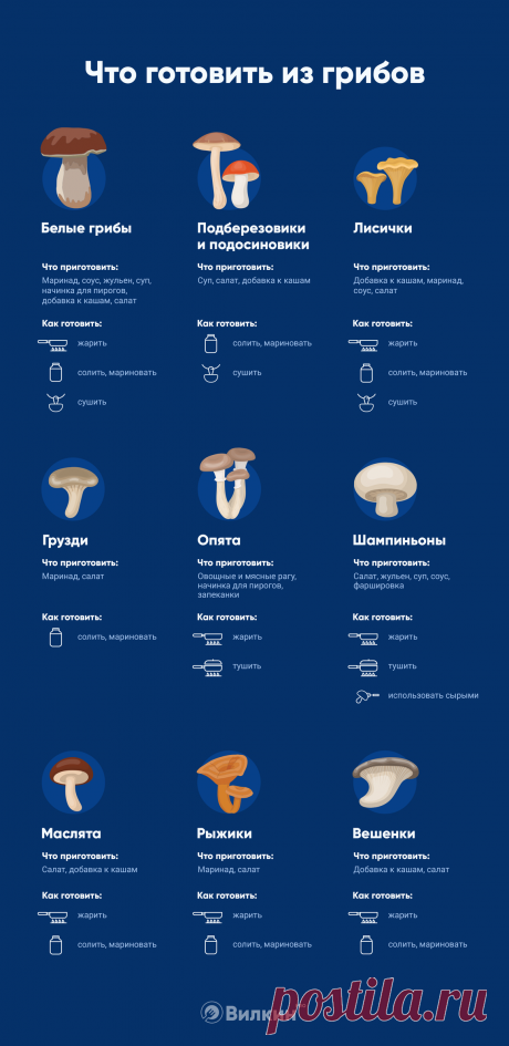 Инфографика: что можно приготовить из грибов