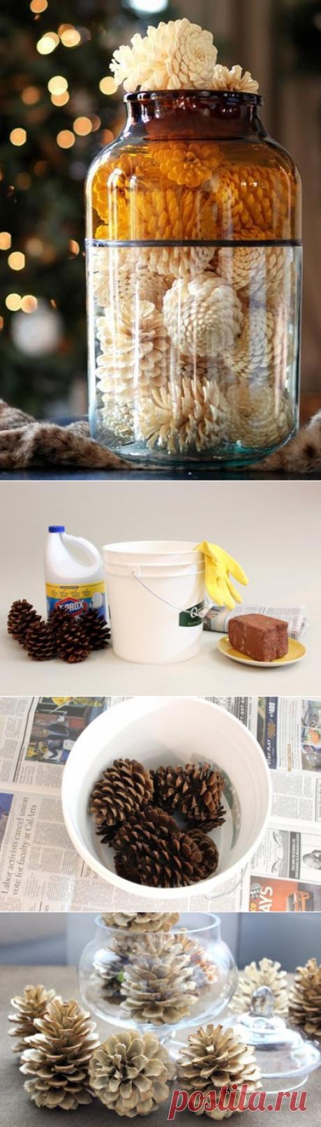 Как отбелить сосновые шишки