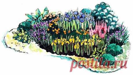 """Ирис – уникальный цветок для оформления, он хорошо смотрится как в массивных посадках, так и в маленьких группах. Ирис в саду можно использовать как в смешанных посадках, так и в моно-цветниках. Цветники, в которых используются только ирисы различных видов и сортов, подобранные по тому или иному признаку, называются иридариями. Предлагаем вам клумбу, в которой центральное место занимает бородатый ирис """"Джейн Филлипс"""", а на переднем плане высажен низкорослый иридодиктиум Да..."""