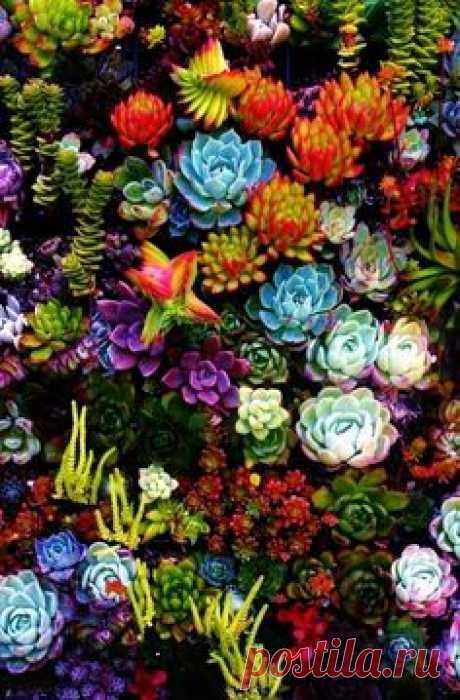 Succulents! Gorgeous!     Pinterest • Всемирный каталог идей