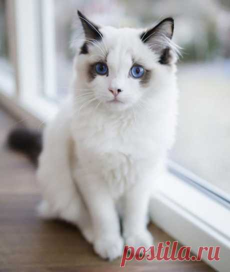 Самые красивые и популярные кошки в мире