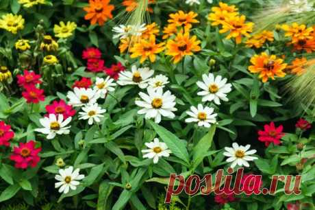 8 цветов, которые так похожи на ромашки - Полезные советы и секреты на все случаи жизни - медиаплатформа МирТесен