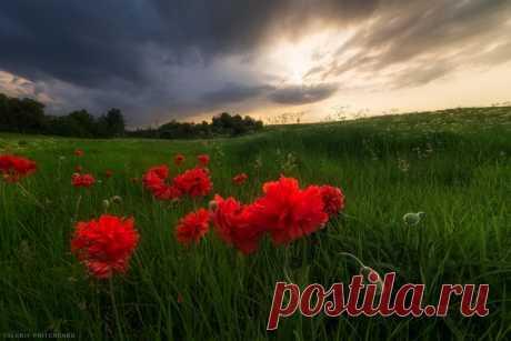 «Вечер перед грозой». Калининградская область. Автор фото: Валерий Притченко. Добрых снов.