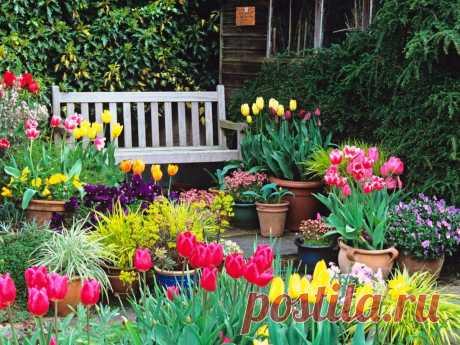 Обзор многолетних цветов для дачи | ПОЛЕЗНАЯ КОПИЛКА | Яндекс Дзен