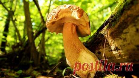 Как не уйти из леса без грибов. Советы профессионального миколога Чтобы насобирать полные корзины грибов, приходится прочесывать гектары леса. От этого устают ноги и спина, тратится много времени. На самом деле микологи давно определили места, в которых грибы растут на каждом шагу. Зная эти секреты, можно сразу находить большие скопления грибов, не тратя силы и