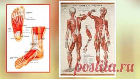 Гимнастика для пальцев ног, чтобы лицо подтянуть и носогубки разгладить   ✧Сама себе косметолог✧   Яндекс Дзен