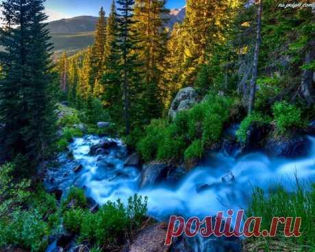 Живая природа во всей своей красе фото