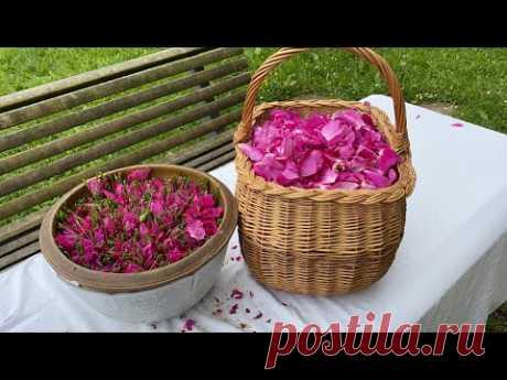 Rose jam with fragrant flavor(مربى الورد الدمشقي للحلويات من أرض النرويج 🌹
