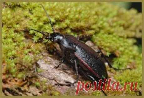 От каких насекомых на даче не стоит избавляться? На любом дачном участке при внимательном рассмотрении можно увидеть целые мириады самых разнообразных насекомых – они активно перемещаются с одного растения на другое, контактируют друг с дружкой, а п…