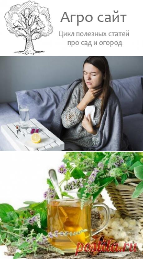 Целебные средства из трав для лечения ангины и больного горла