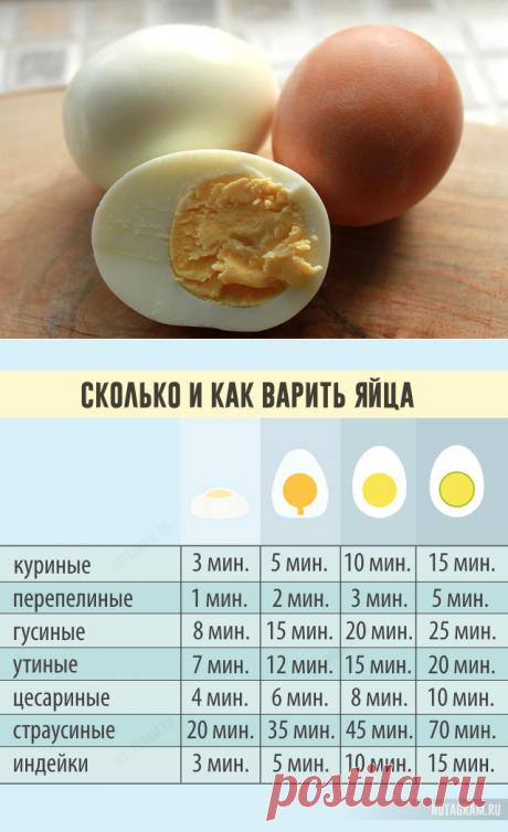 Сколько и как варить яйца: полезная инфографика » Notagram.ru