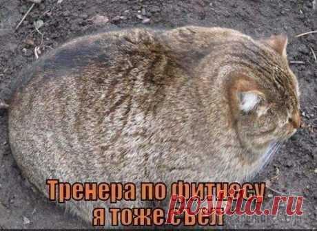 He comido al entrenador por fitnesu también)))