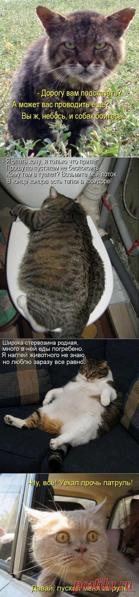 Котодром (15.09.13) | SOFTMIXER