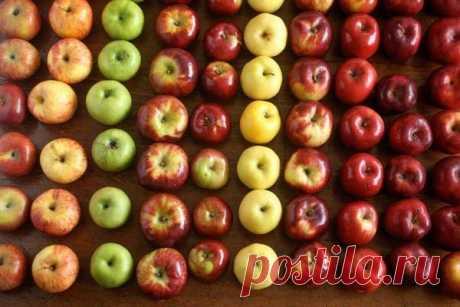 Цвет яблок влияет на их полезные свойства