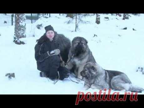 TEST.TV: Кавказцы - действительно ли они так опасны?