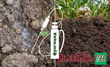 Обеззараживание почвы от грибковых инфекций   Почва и плодородие (Огород.ru)