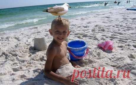 Смешные пляжные фото: 50 убойных снимков