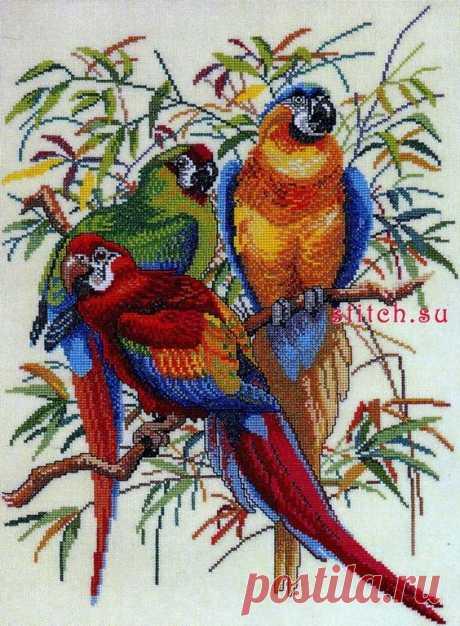 "Eva Rosenstand 12292 ""Parrots"""