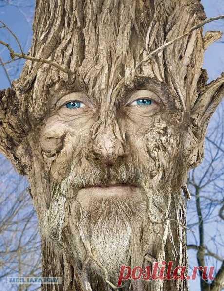 Группы деревьев фото
