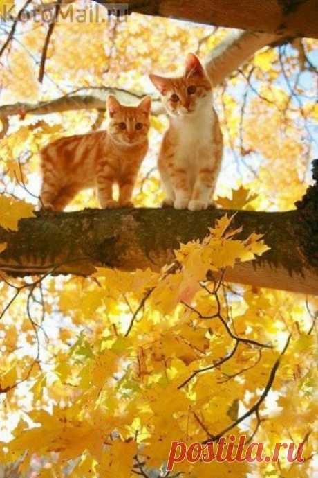 А, вообще, и осень - это тоже красиво!