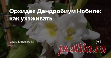 Орхидея Дендробиум Нобиле: как ухаживать Денбробиум Нобиле - это орхидея. Не такая,  как фаленопсис, но тоже очень красивая.