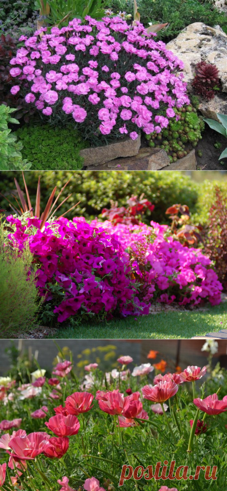 ¿Que flores anuales florecen todo el verano?