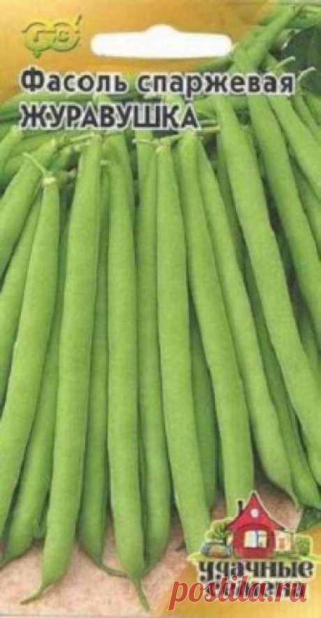"""Семена. Фасоль """"Журавушка"""" (вес: 5,0 г) Всхожесть: 97%. Раннеспелый (48-50 дней от всходов до плодоношения) сорт спаржевой фасоли. Растение кустовое, высотой 40-50 см, среднеоблиственное. Листья зеленые. Цветки средней величины, белые. Бобы слабоизогнутые, без пергаментного слоя и волокна, зеленые, длиной 12-13 см, шириной..."""