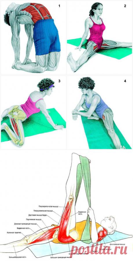 34 Упражнения на растяжку, которые подарят вам новое тело | Тайны женской жизни