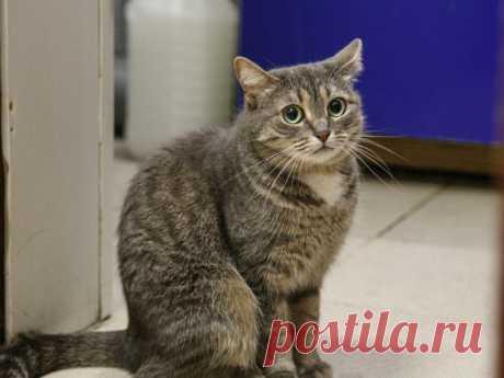 Соседка рассказала про уличную кошку, которая мяукала рядом с ней и отчаянно звала за собой | Кошка.ru | Яндекс Дзен