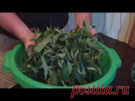 Приготовить Копорский чай очень просто. Ищем полянку или луг, располагающихся на расстоянии трех километров от оживленной трассы. Собираем листья (лучше утро...